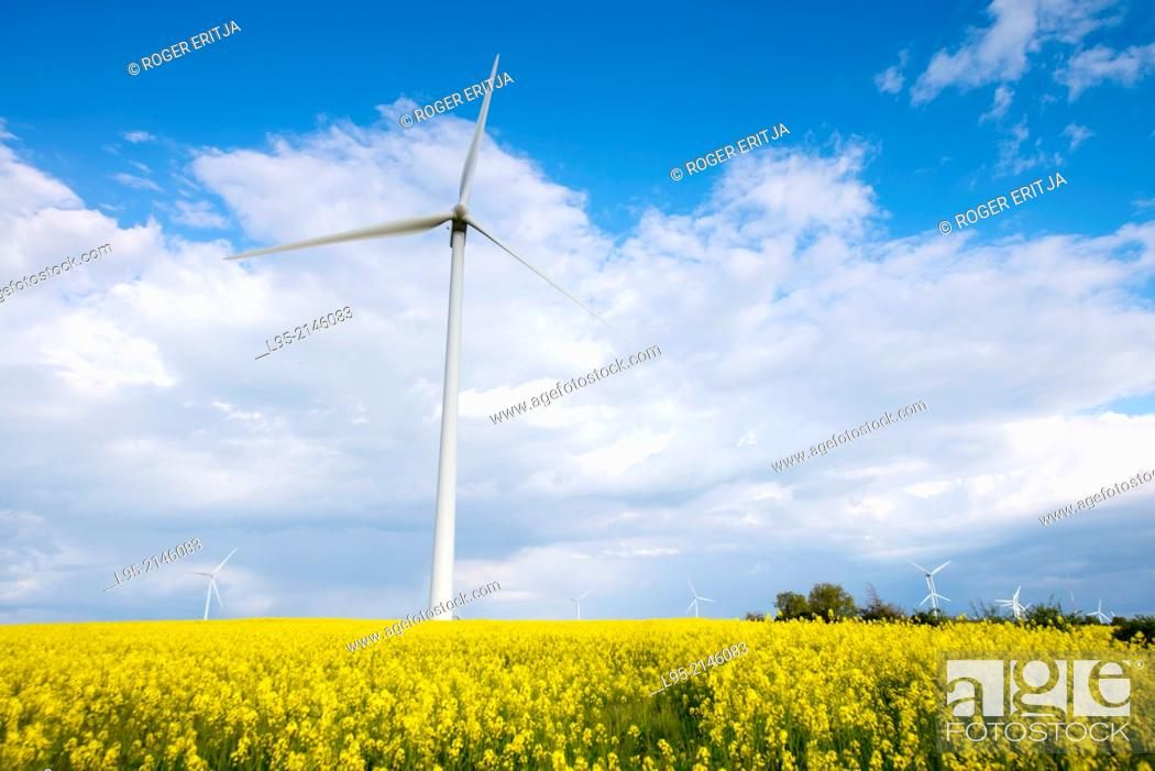 Stock Photo: Power wind mills across fields of Canola (Brassica napus) or colza cultivated fields in spring, Spain.
