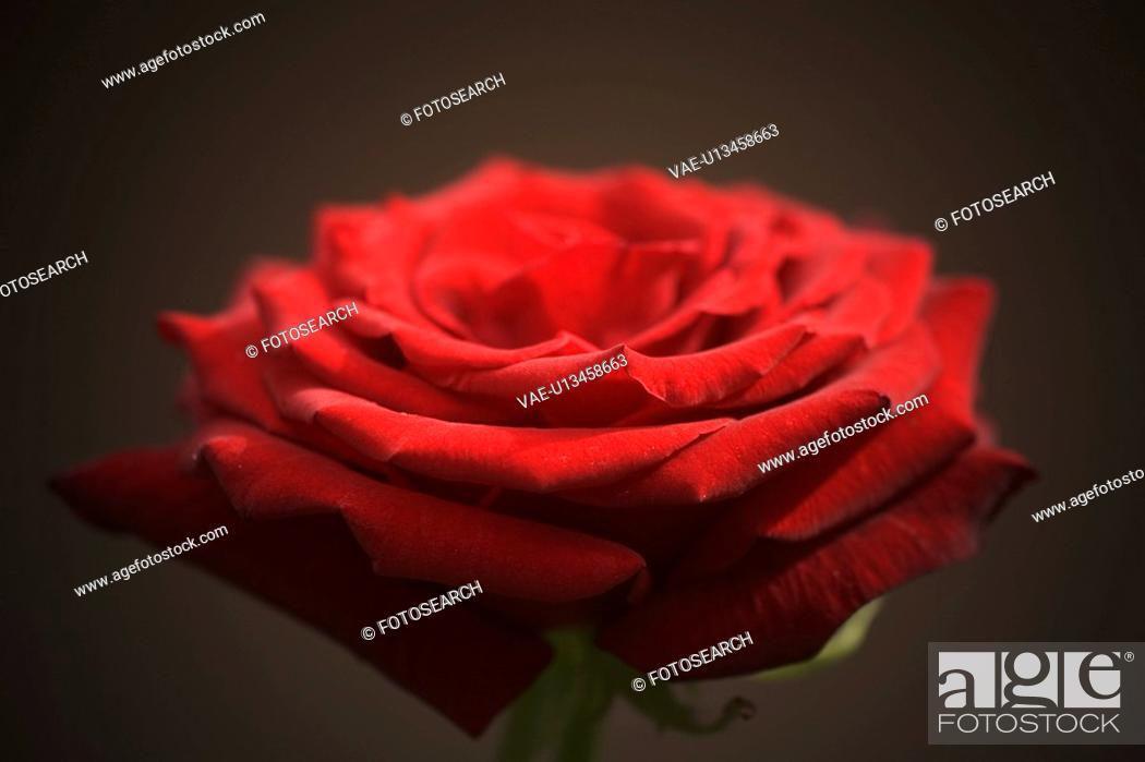 Stock Photo: Beauty, Display, Close-Up, Blossoms, Arrangement.