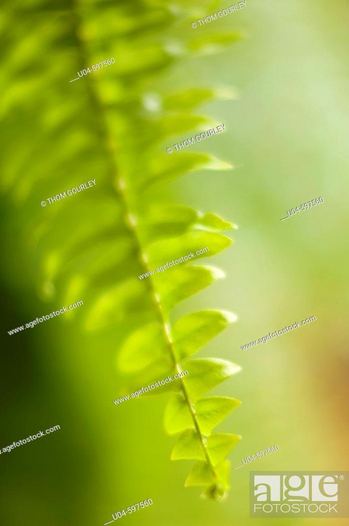 Stock Photo: Fern leaf.