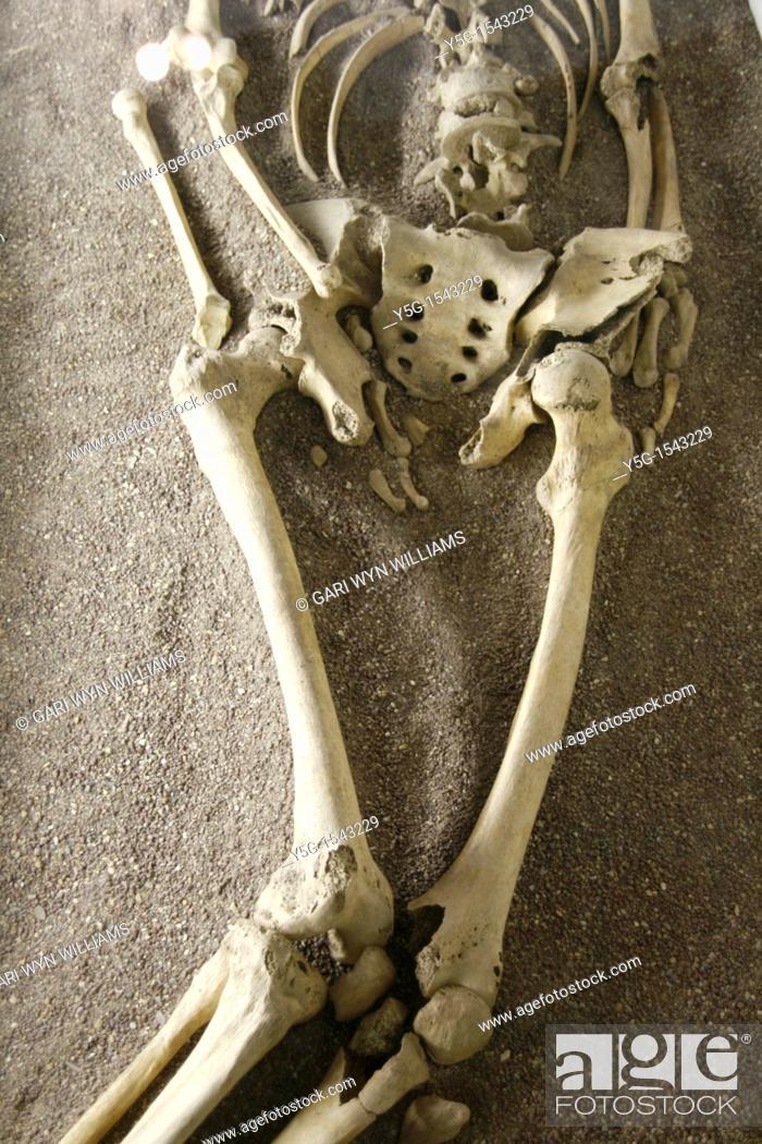 Stock Photo: skeleton in museum in rome.