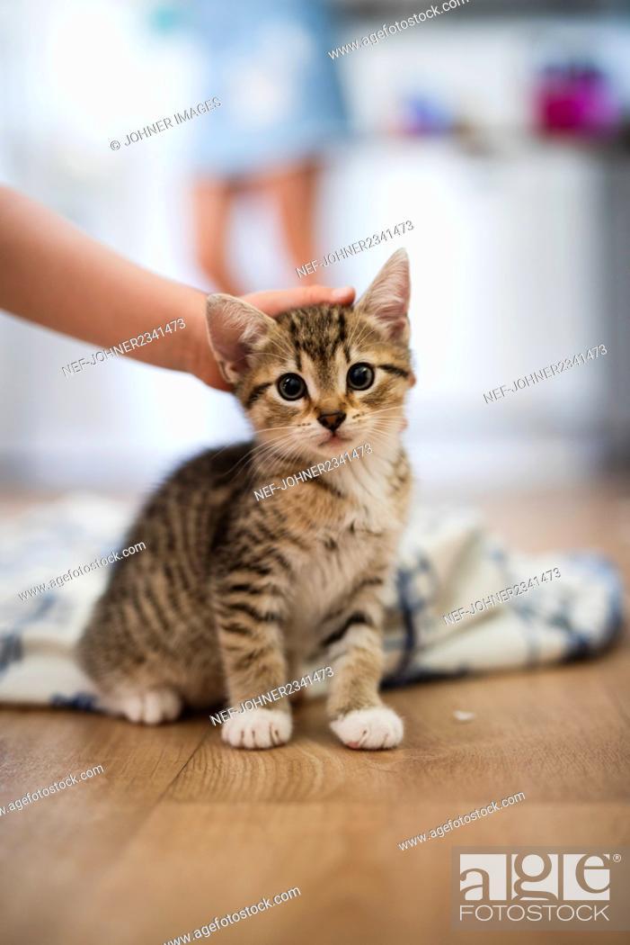 Stock Photo: Person petting kitten.