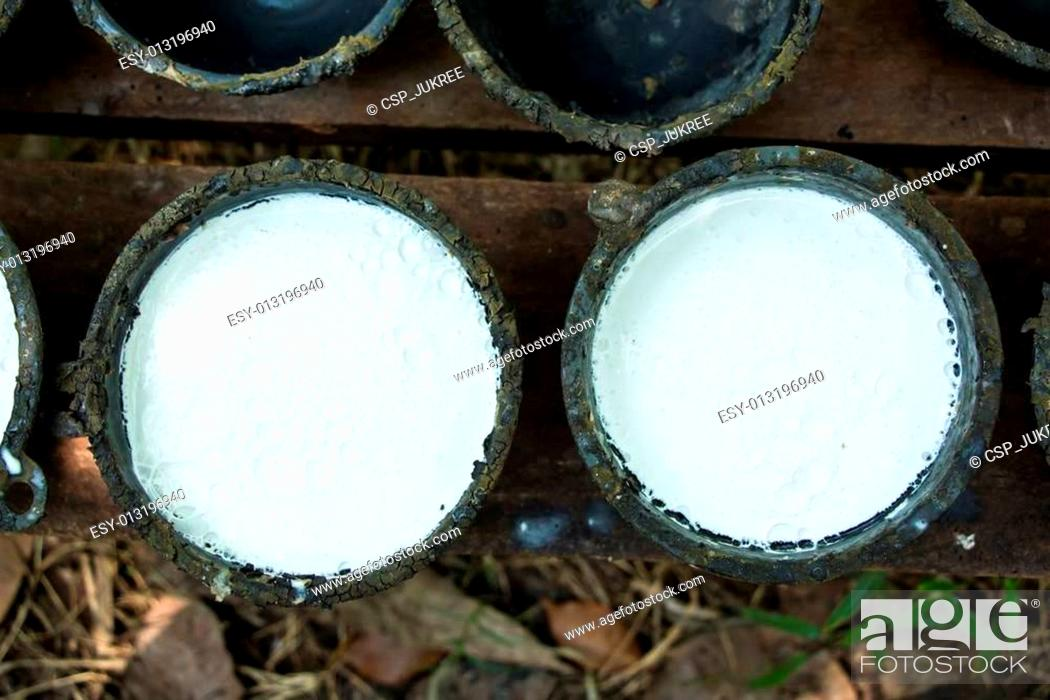 Stock Photo: Bowl to collect milk from rubber tree.