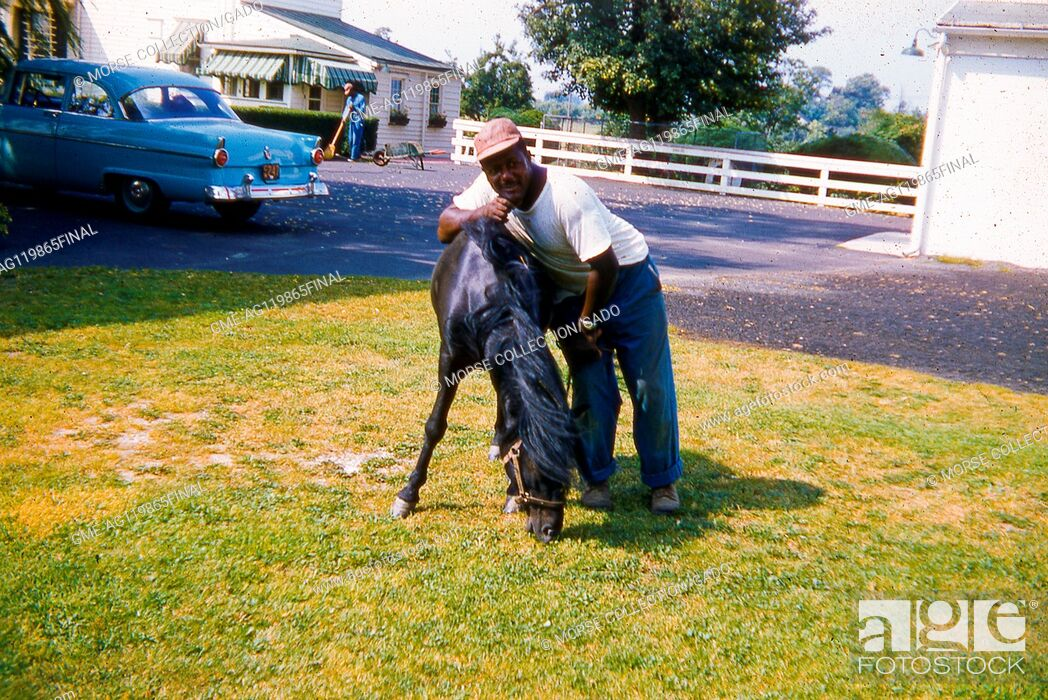 Imagen: Portrait of an African American man posing with a young black bridled horse in a grassy yard, June, 1959. A blue car is parked in the driveway behind him.