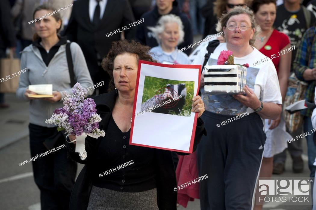 Stock Photo: Demonstrators protesting about the plans to cull badgers in wales as a means of controlling bovine TB, Aberystwyth Wales UK 2011.