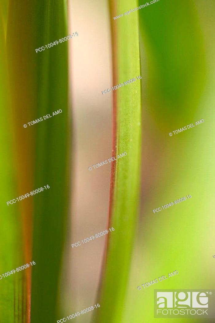 Stock Photo: Extreme close-up of green leaves edged with red.