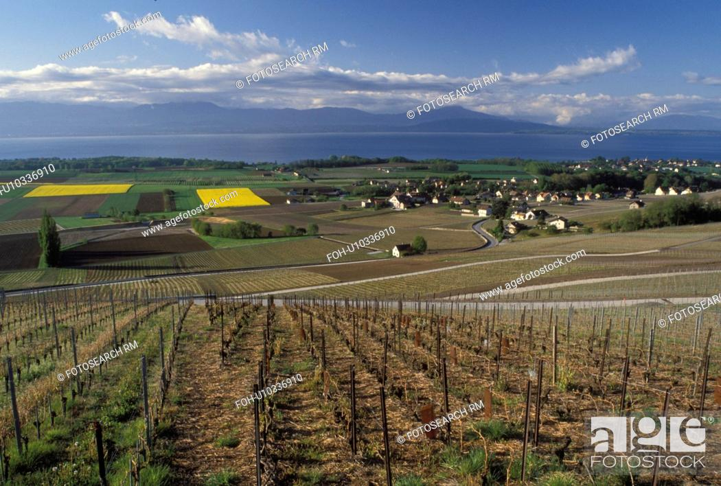 Stock Photo: Switzerland, Vaud, La Cote, Fechy, Lake Geneva, Europe, Scenic view of the countryside covered with vineyards and the village of Fechy in the spring along Lac.