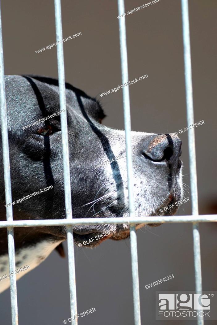 Stock Photo: Caged Dog.
