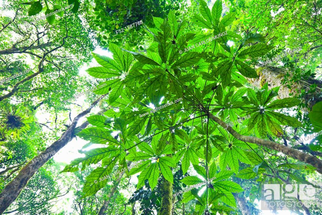 Stock Photo: Monteverde Cloud Forest Nature Reserve, Costa Rica, Central America, America.