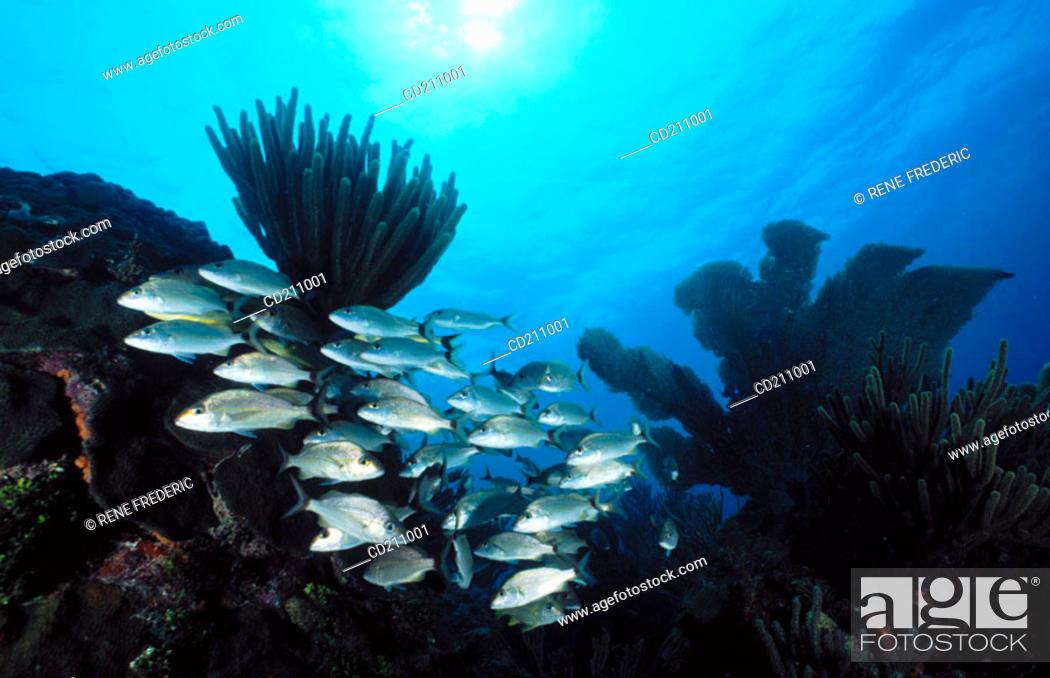 Stock Photo: Reef scene. National Marine Sanctuary at Key Largo. Florida. USA.