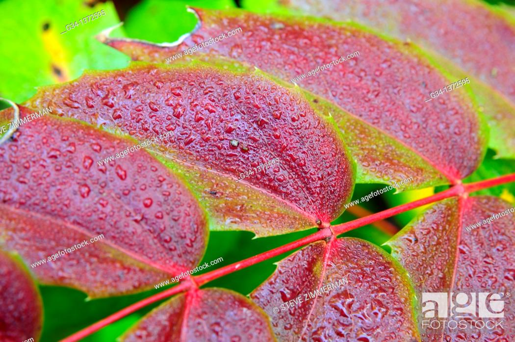 Stock Photo: Leaf Dew.