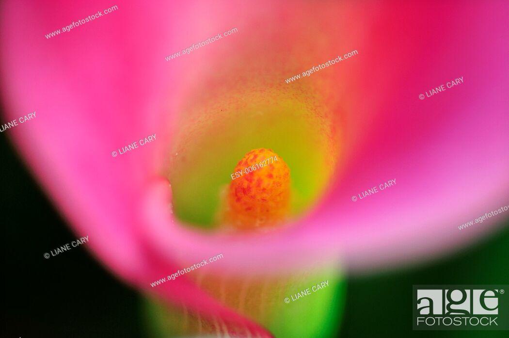 Stock Photo: flower details.