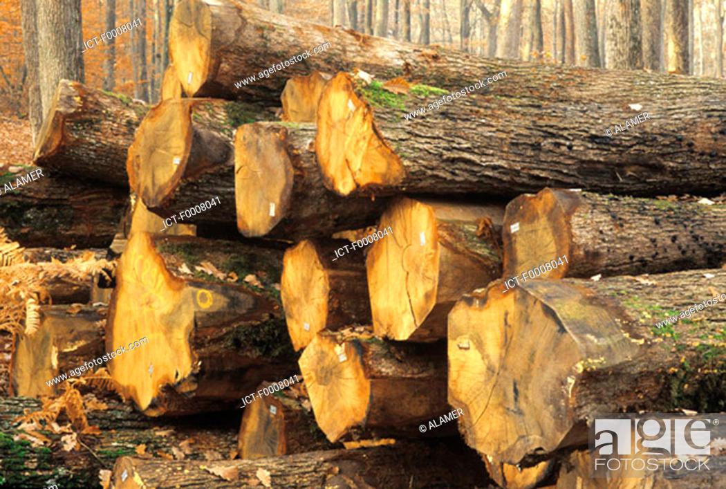 Stock Photo: Treetrunks.