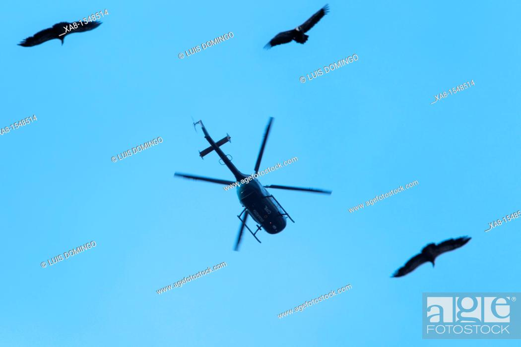 Stock Photo: many vultures fly over pyrenees's sky.