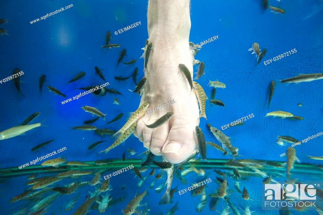 "Stock Photo: Tourists enjoy a """"fish massage"""" (pedicure) in southeast Asia."