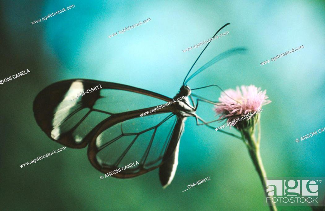 Stock Photo: Butterfly. Monteverde, Costa Rica.