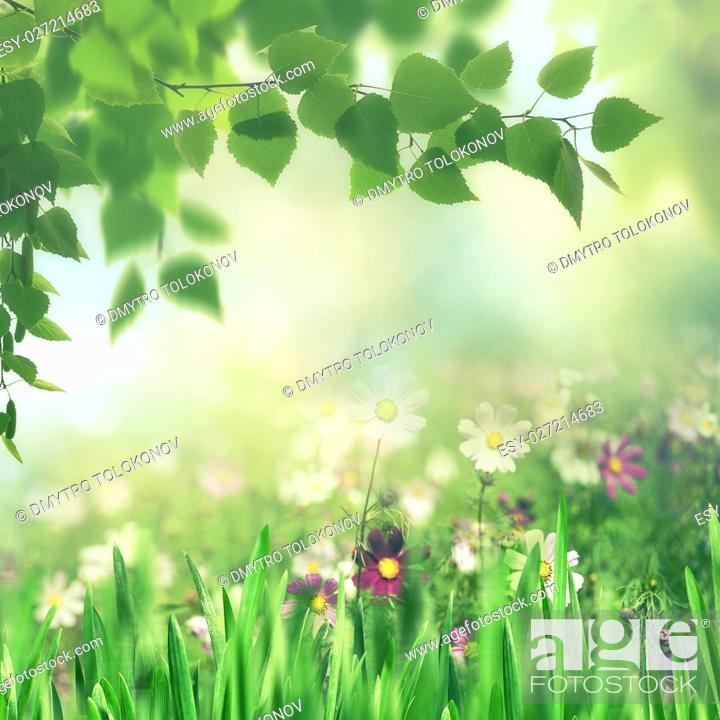 Stock Photo: Beauty summer meadow with blooming flowers, seasonal abstract backgrounds.