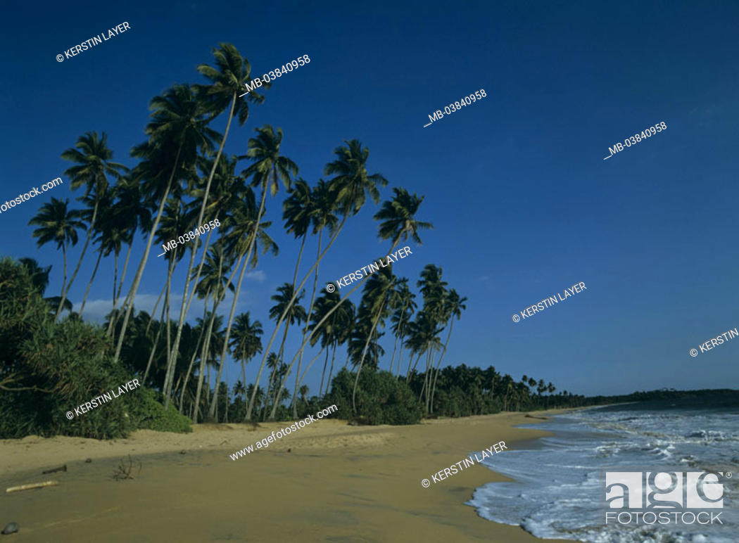 Stock Photo: Palms, beach, Indian ocean.