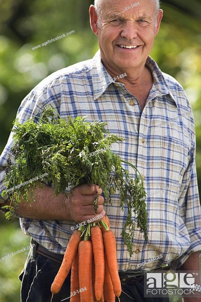 Stock Photo: Senior man holding bunch of carrots in vegetable garden, smiling, front view, portrait.
