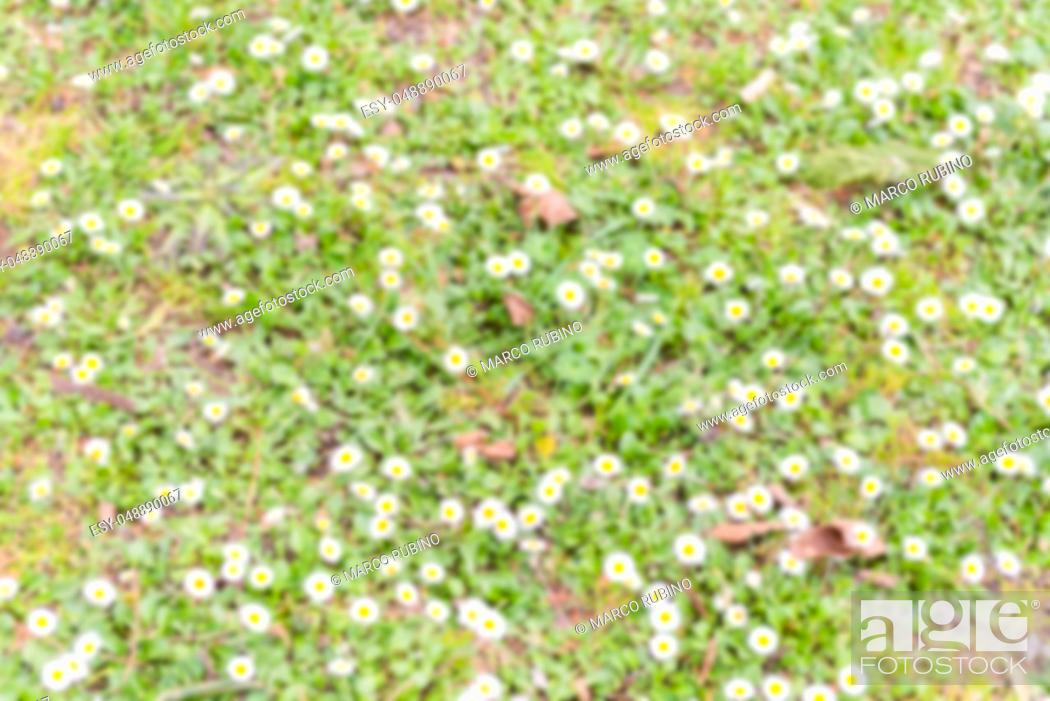Stock Photo: Defocused background of a field with daisy flowers. Intentionally blurred post production for bokeh effect.