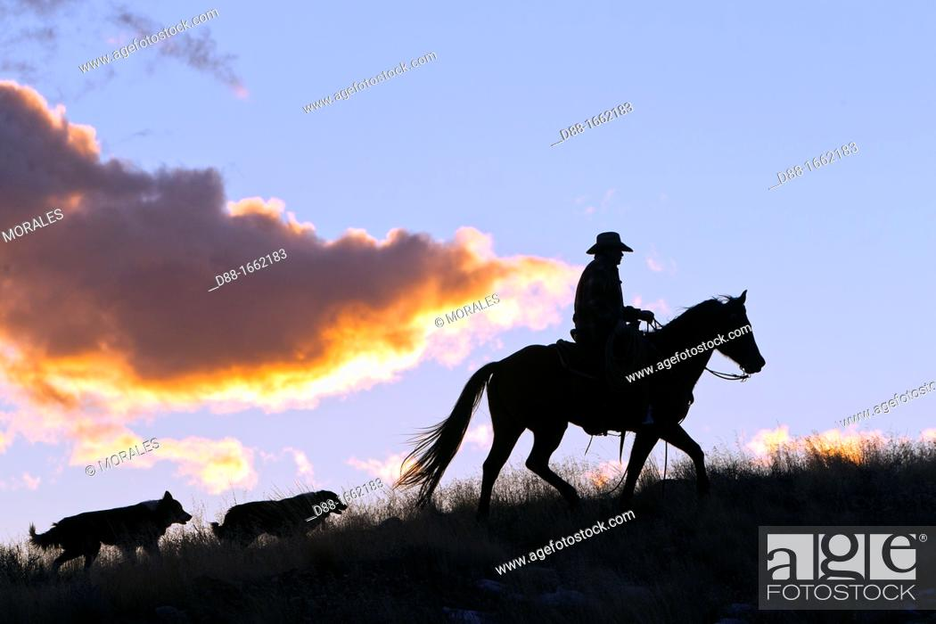 Stock Photo: Cowboy, The Hideout Guest Ranch, Shell, Wyoming, USA.
