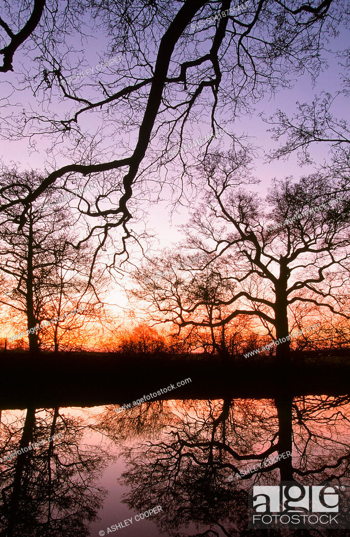 Stock Photo: Trees reflected in a pond in Lancashire UK at sunset.