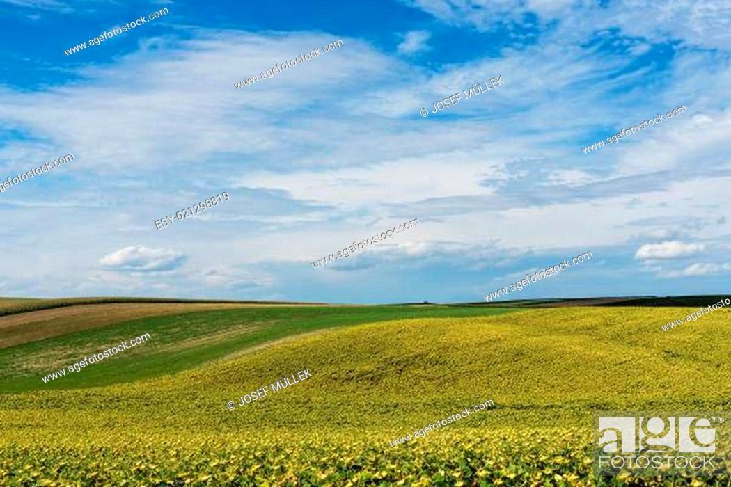 Stock Photo: Landwirtschaftliche Landschaft.