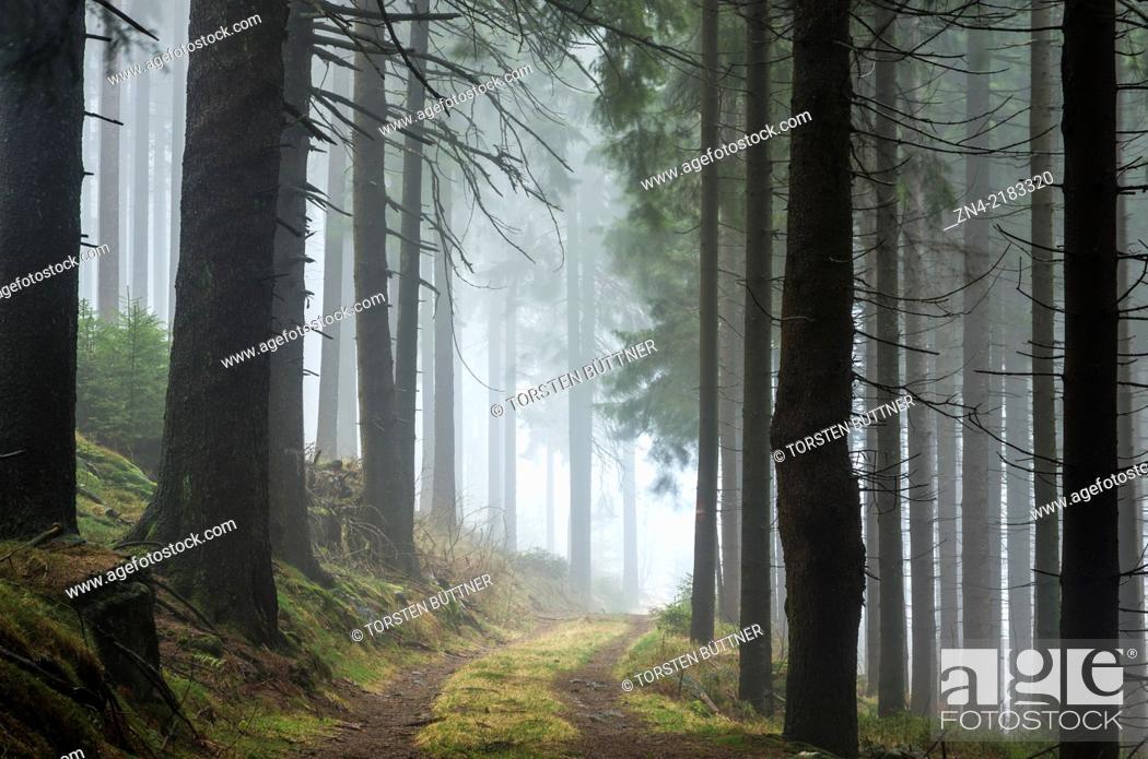 Stock Photo: Coniferous Forest Surrounding in Sternwald Wind Farm. Upper Austria. Austria.