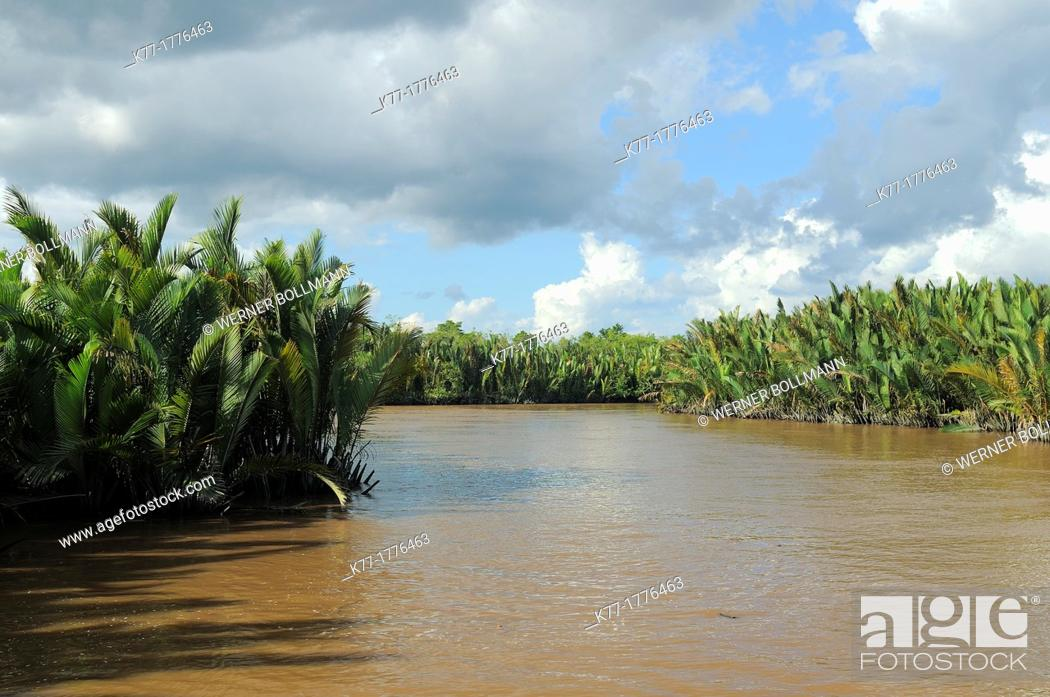 Stock Photo: Sekonyer River with Nipa Palms Nypa fruticans, Province Kalimantan, Borneo, Indonesia.