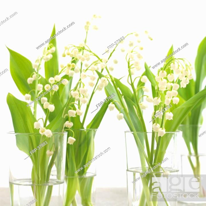 Stock Photo: Lilies of the valley in glasses.