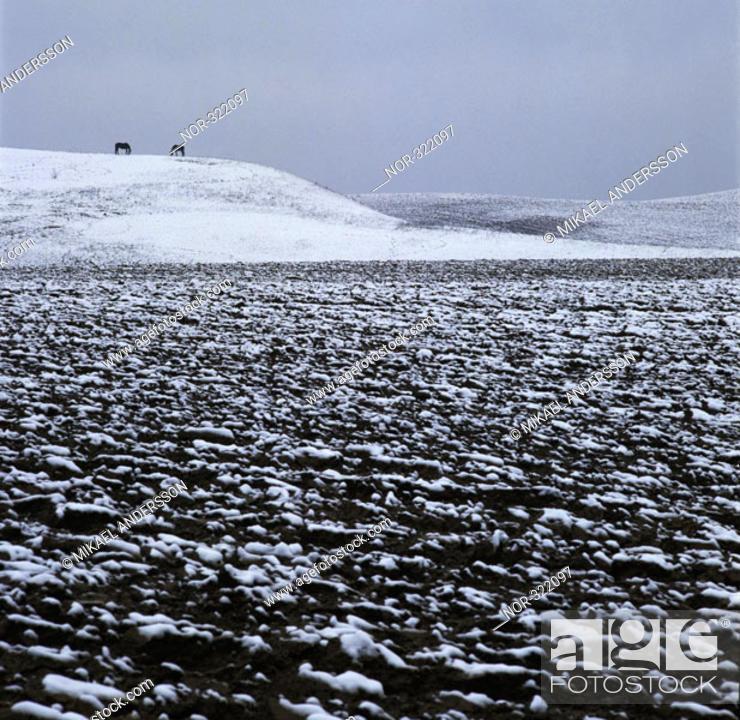 Stock Photo: Snowy arable land.