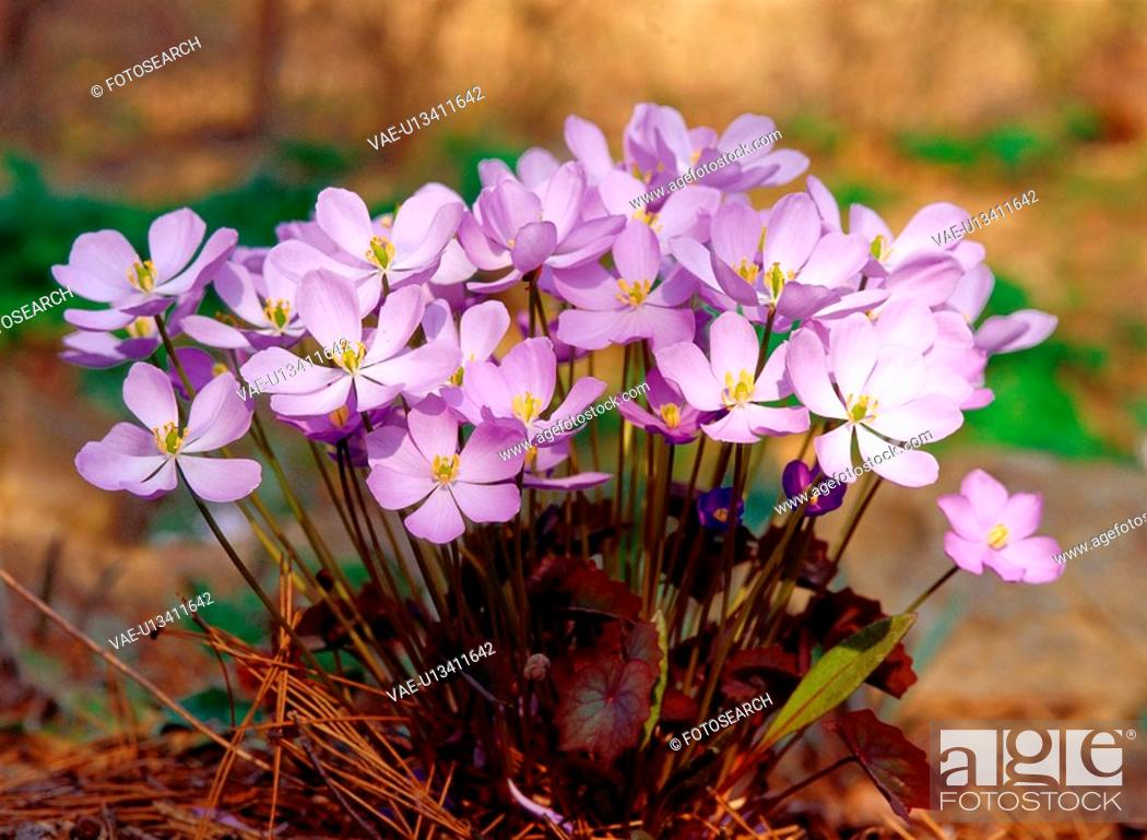 Stock Photo: flowers, nature, plants, flower, plant, film.