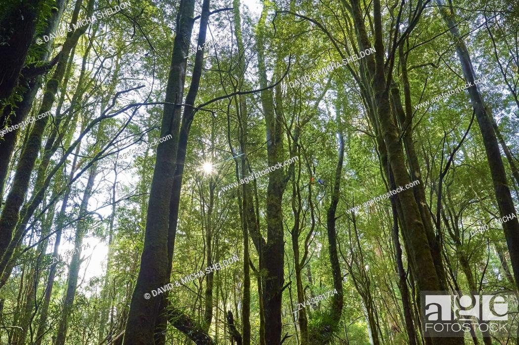 Stock Photo: Nature landscape of the rainforest in the Great Otway National Park in spring, Australia.