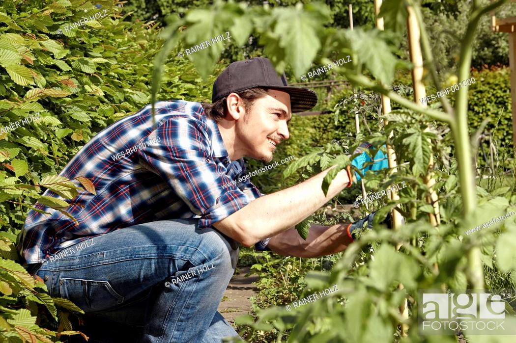Stock Photo: Smiling man working in garden.