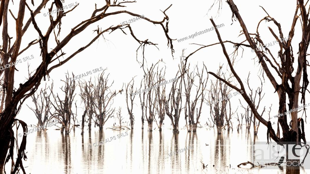 Stock Photo: Lake Nakuru, Kenya. The dead trees on Lake shores were killed by the rising of the alcaline waters of the lake in 2014.