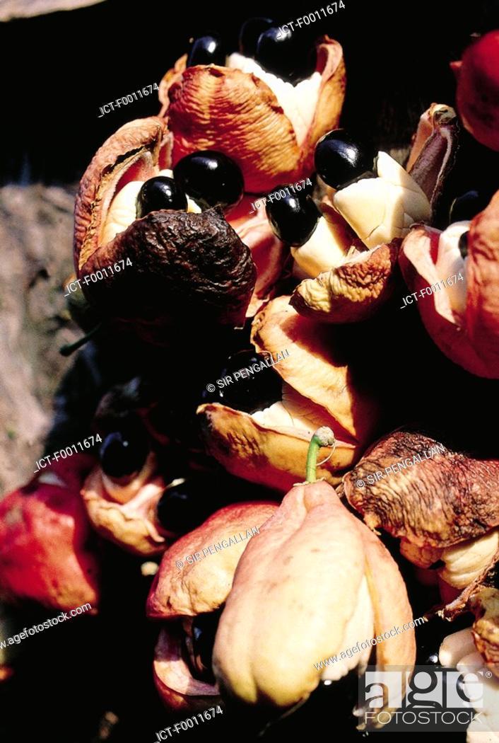 Stock Photo: Jamaica, Kingston market, jamaican ackees fruits.