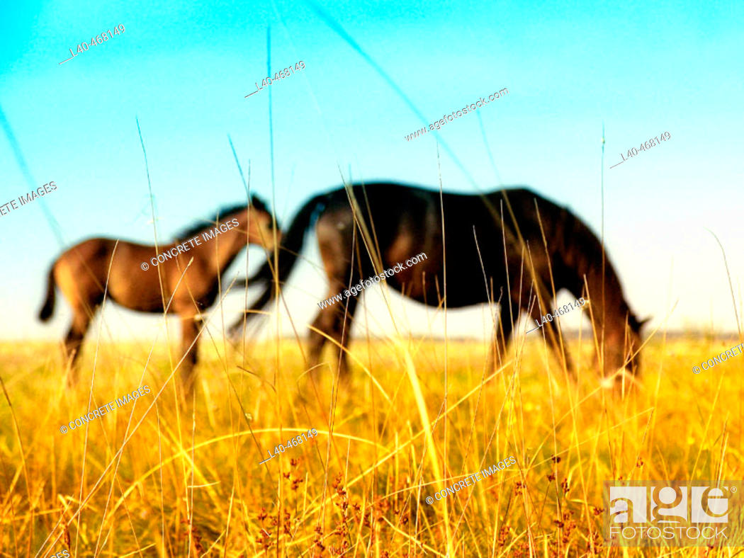 Stock Photo: Horses in the Puszta, Hortobágy National Park. Hungary.