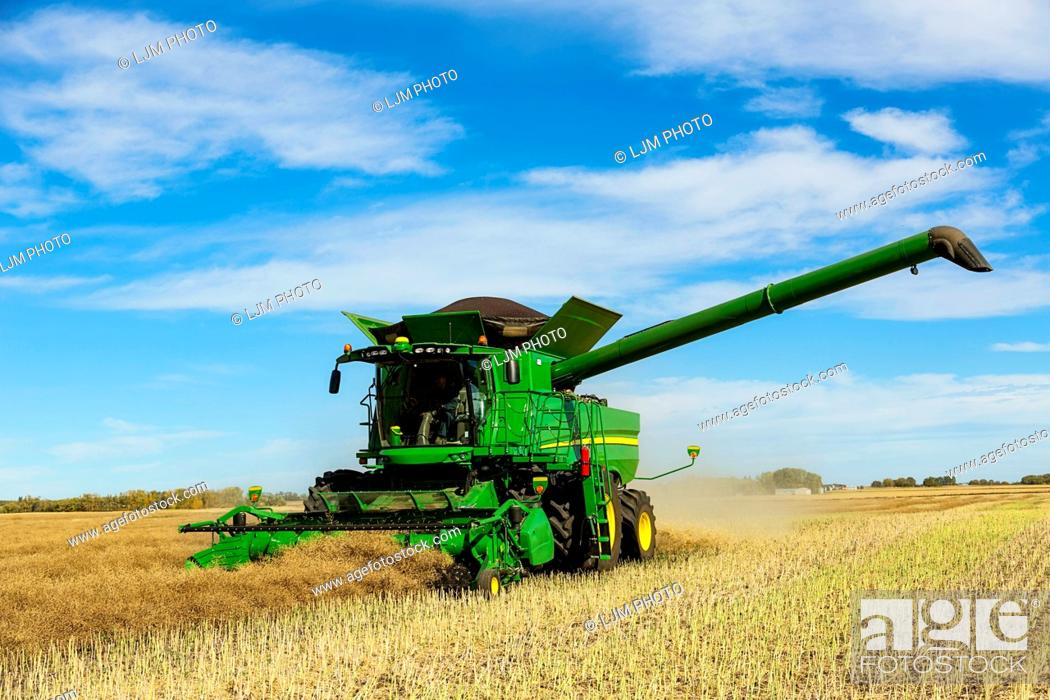 Stock Photo: A farmer driving a combine with a full load ready to transfer with the auger arm extended during a Canola harvest; Legal, Alberta, Canada.
