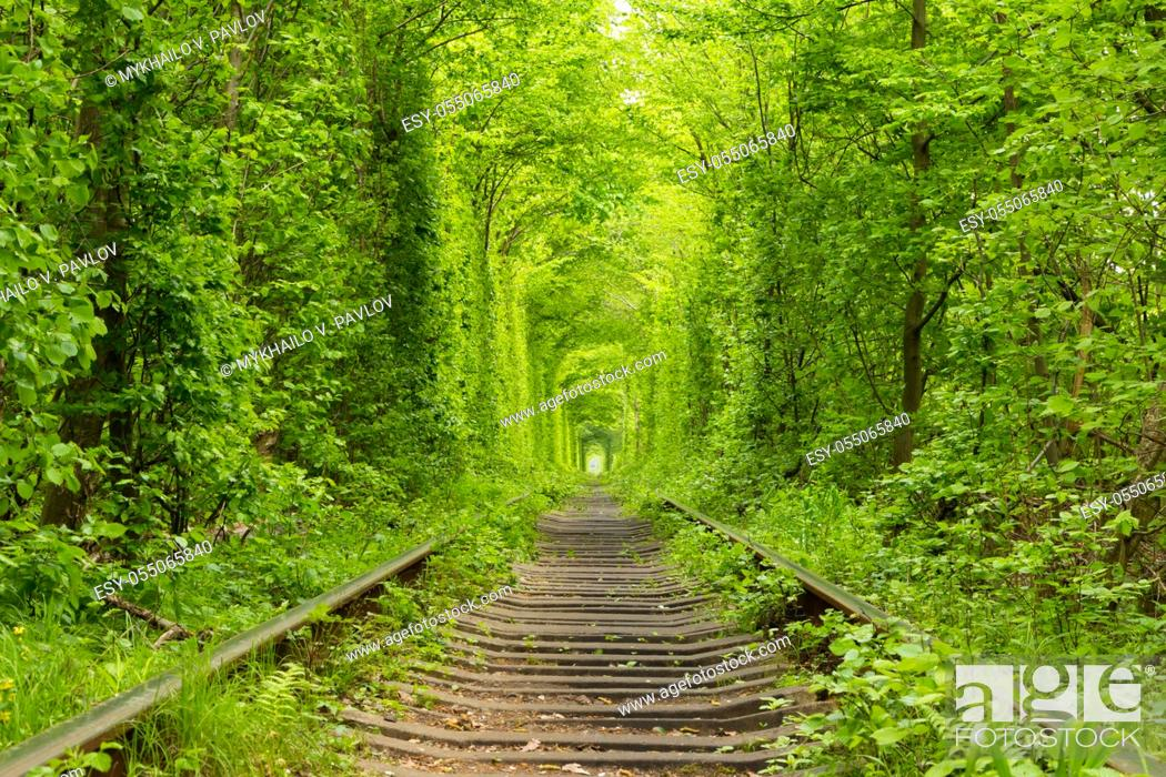 "Stock Photo: Ukraine. Spring. Railway in the dense deciduous forest. """"Tunnel Of Love""""."