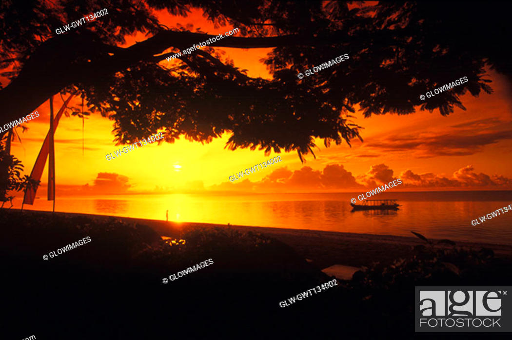 Stock Photo: Silhouette of a tree along a river at sunset, Bali, Indonesia.