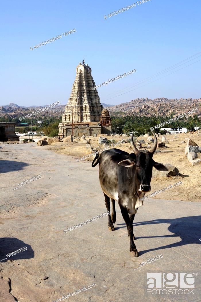 Stock Photo: Virupaksha Temple , Hampi, UNESCO World Heritage site , Deccan plateau , Taluka Hospet , District Bellary , Karnataka , India.