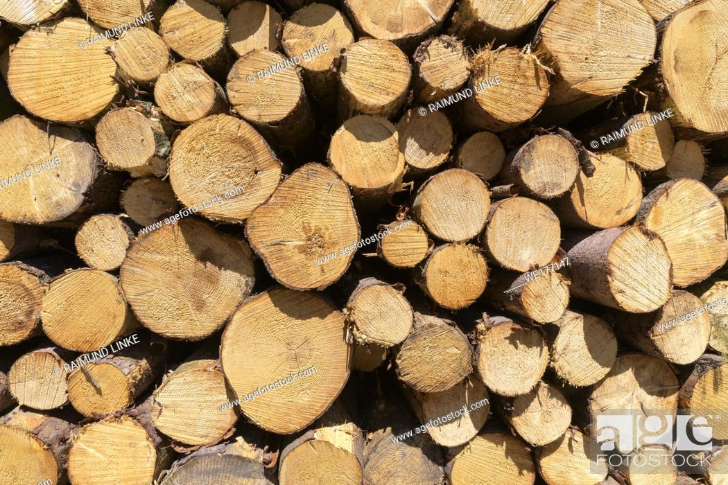 Photo de stock: Stacked tree trunk wood, Hesse, Germany.