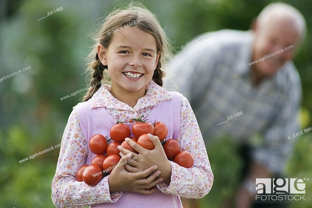 Stock Photo: Girl 8-10 carrying bunch of tomatoes, smiling, portrait, grandfather working in vegetable garden.