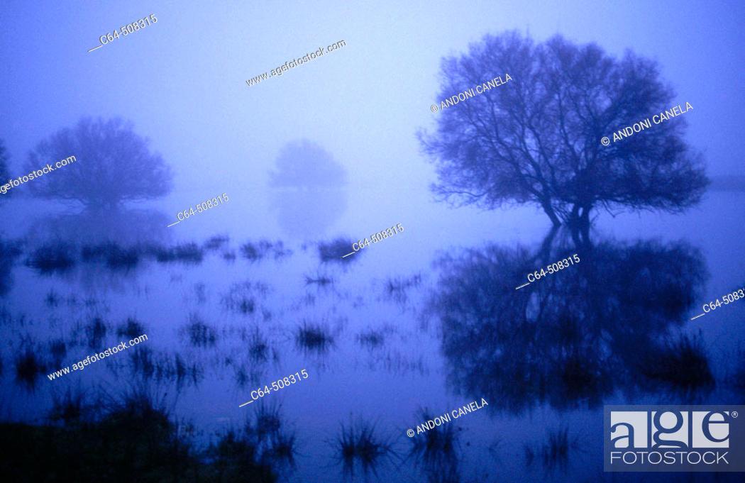 Stock Photo: Tablas de Daimiel National Park. Ciudad Real province. Castilla-La Mancha. Spain.