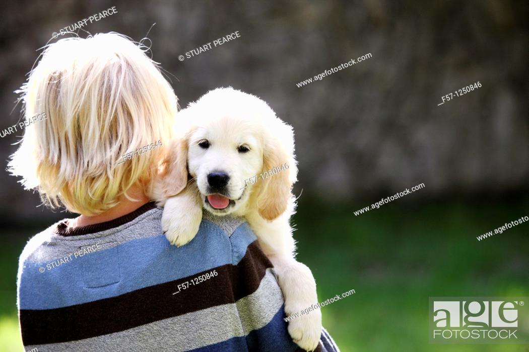 Stock Photo: Golden Retriever puppy.