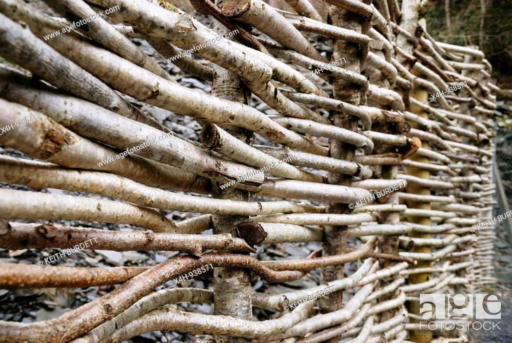 Stock Photo: Fencing made from woven Hazel stems, Wales.