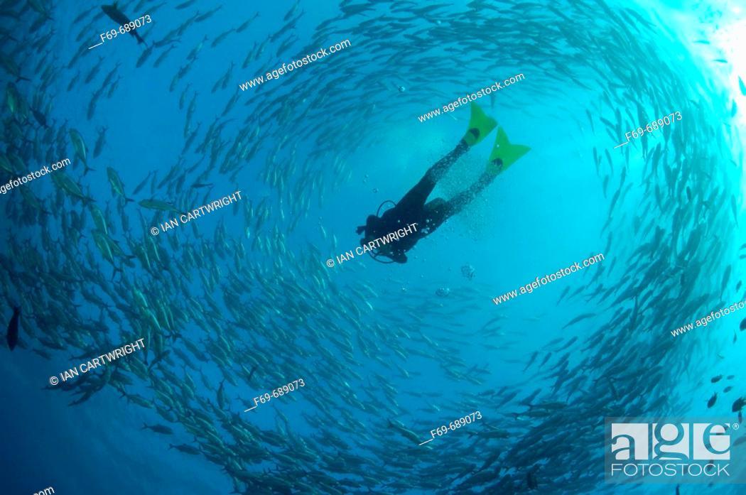 Stock Photo: Diver with Bigeye trevally, (Caranx sexfasciatus), Tulamben in Bali.
