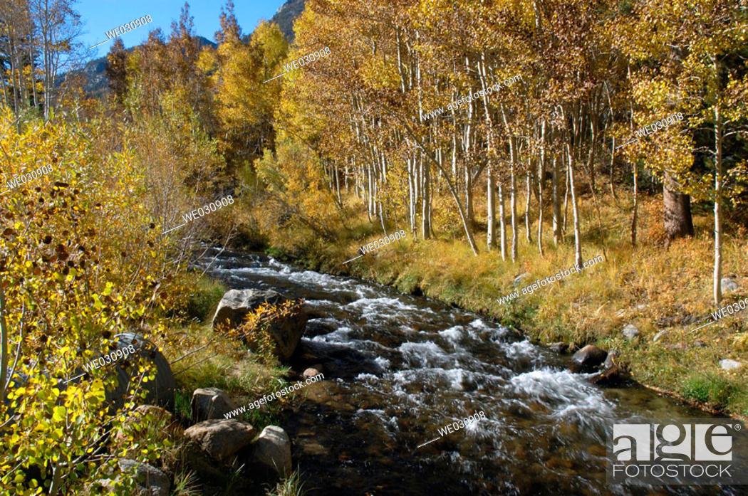 Stock Photo: Autumn stream. California, USA.