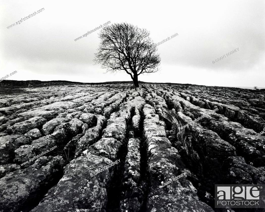 Stock Photo: Limestone Pavement , Malham , Yorkshire , England.