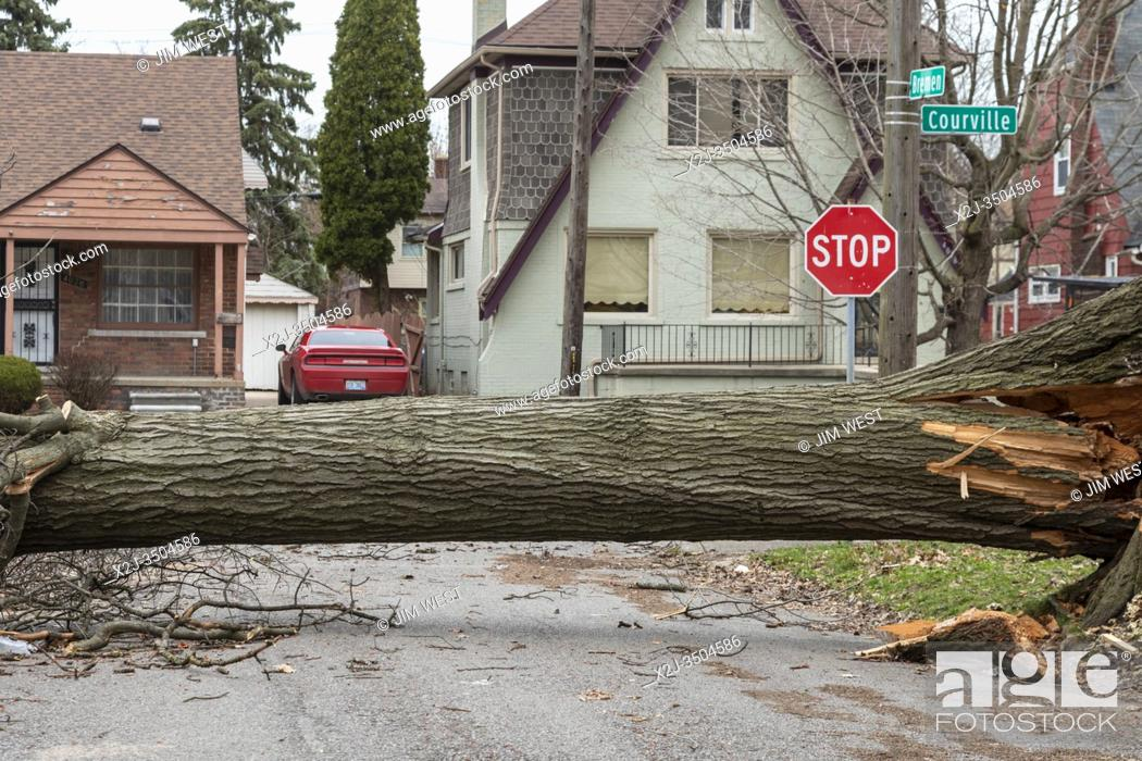 Stock Photo: Detroit, Michigan - A large tree that fell during a storm blocks Bremen Street in the Morningside neighborhood.