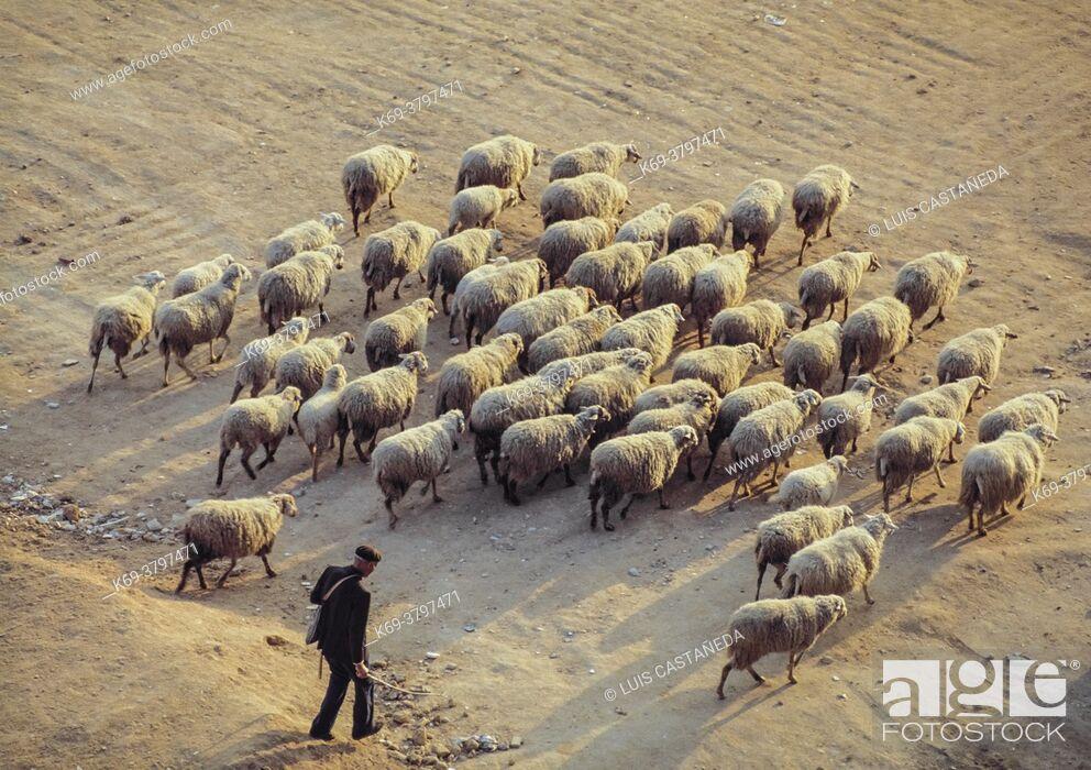 Stock Photo: Shepherd and Herd. Mdrid. Spain.